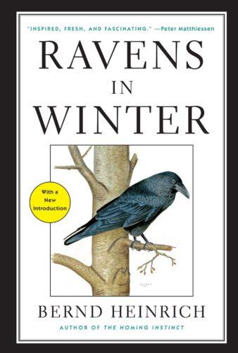 Ravens in Winter, by Bernd Heinrich
